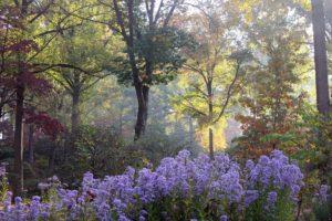tyler arboretum